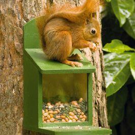 Foderhus til egernet