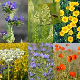 Blanding til solitærbier, 22 sorter (25g)