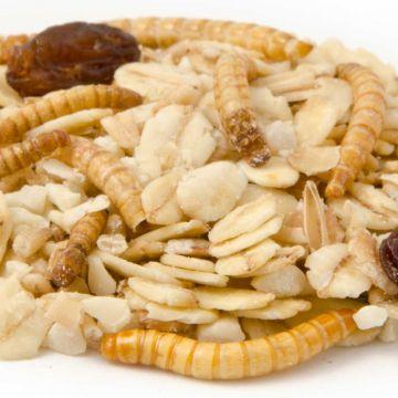 Premium fedtfoder med melorme