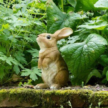 Kanin (stående)