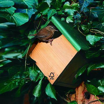 Fågelholk Peru