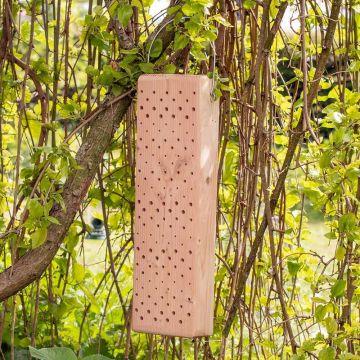 Insektsblock Sicilien