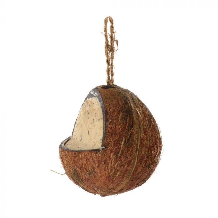 Kokosnød med melorme og insekter