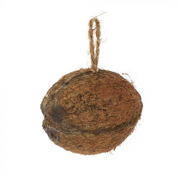 Halv kokosnød med melorme og insekter