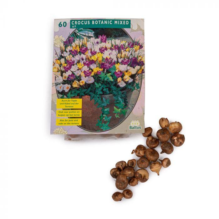 Kaukasisk vintergæk (Galanthus woronowii) 25 stk