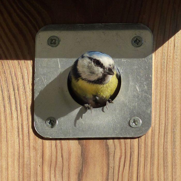 Täckplåt för fågelholk