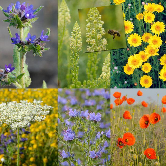 Blomblandning för solitärbin
